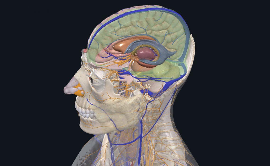 holistic-bodywork-mit-Gehirn-arbeiten